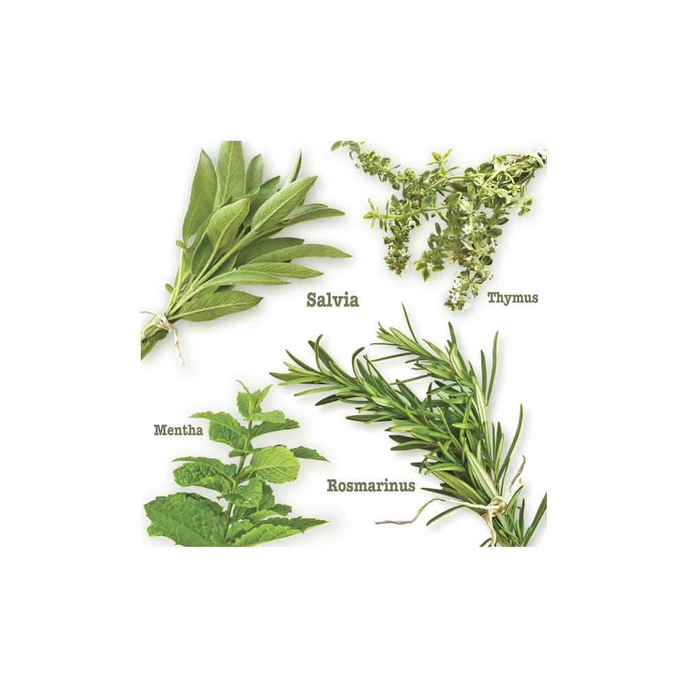 Serviette Gartenkräuter,FSC Mix Credit, 33x33cm, Beutel 20Stück